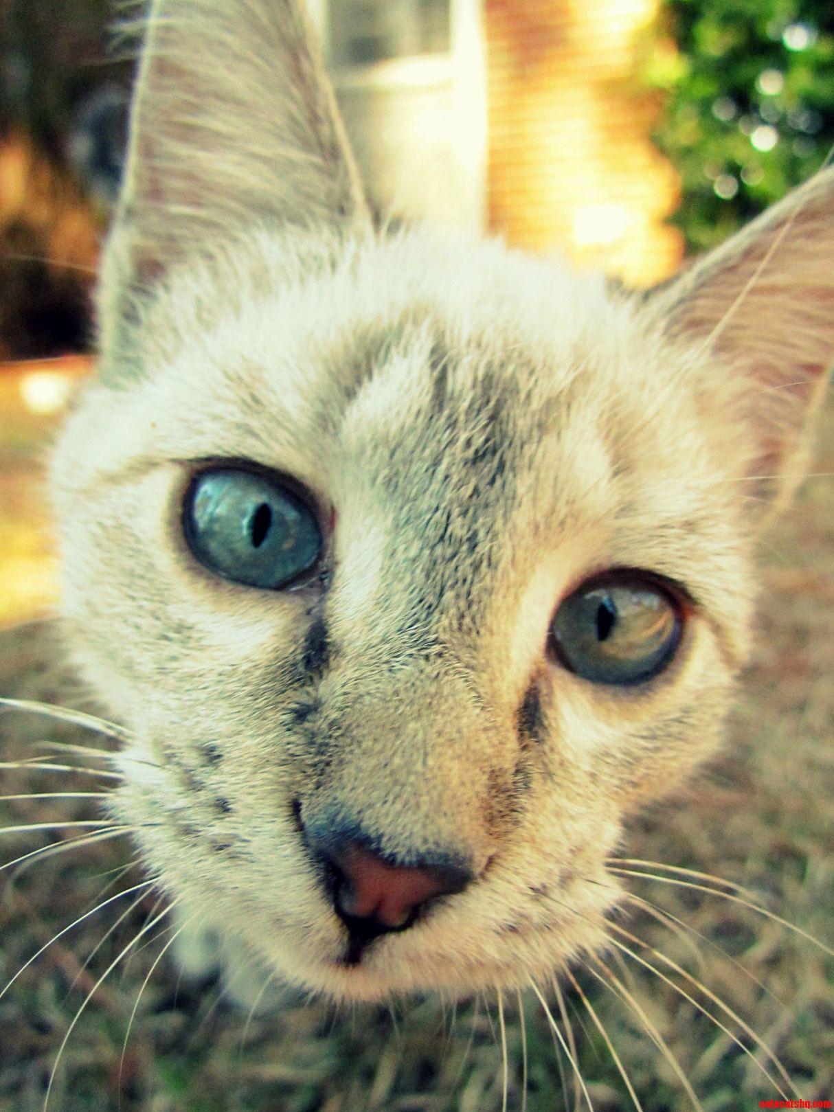My Cat Kat Is A Camera Hog.