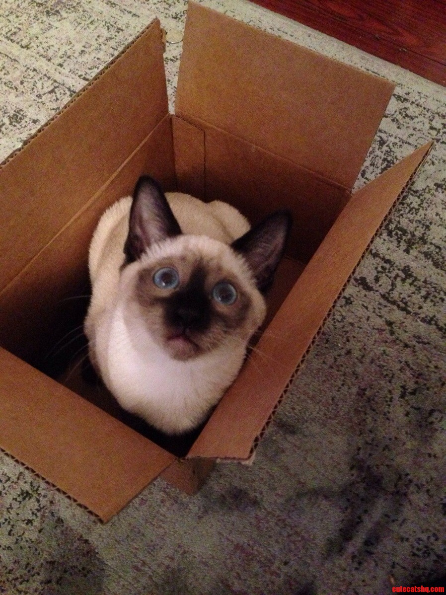 My Cat Loves Boxes Its Too Cute For Me To Handle