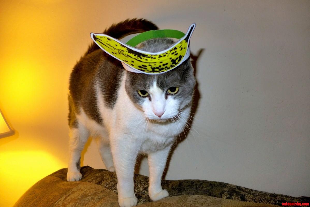 My Cat…..W Banana