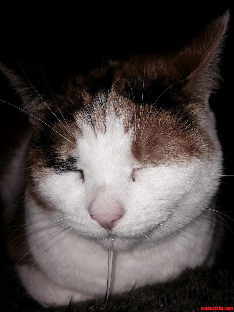 My Dribbly Kitty
