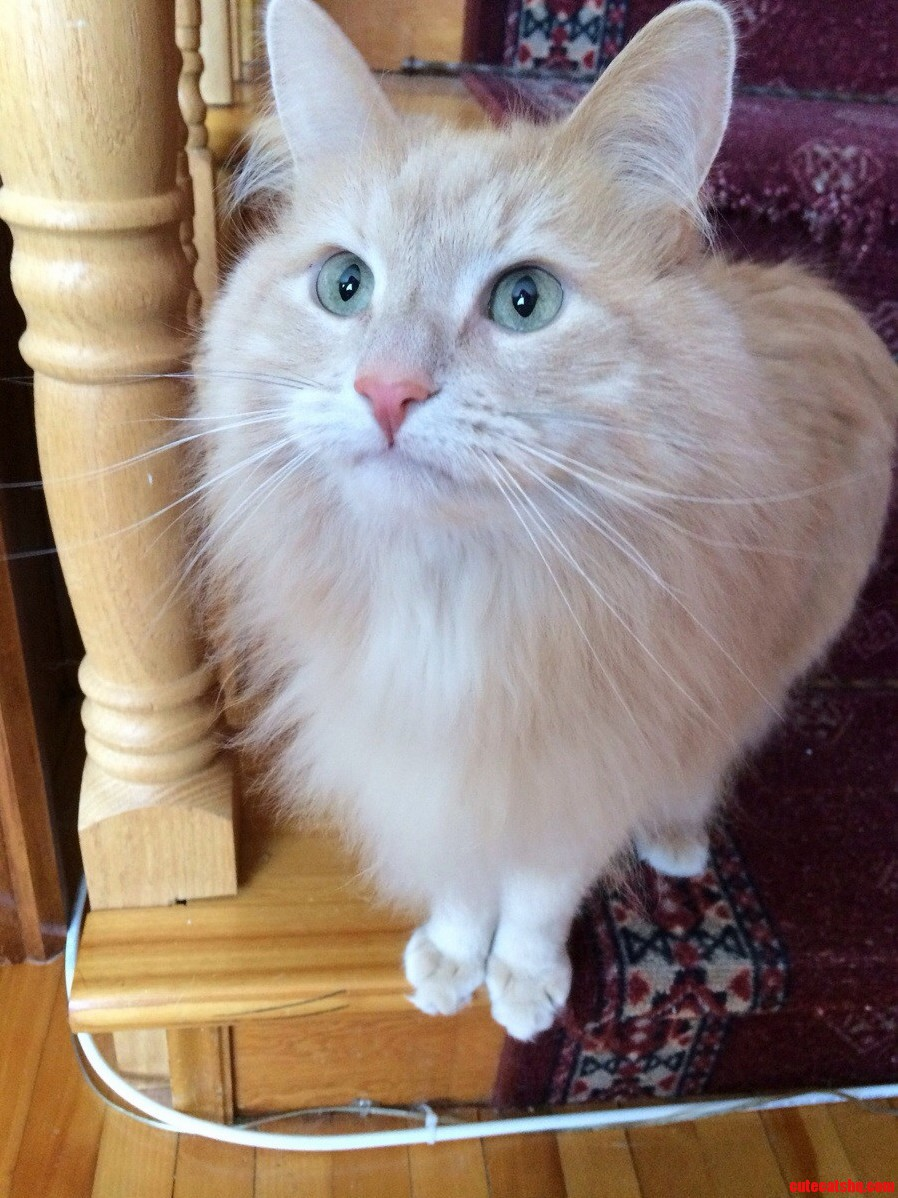 My Godmothers Cat Is Such A Pretty Boy Meet Bobby