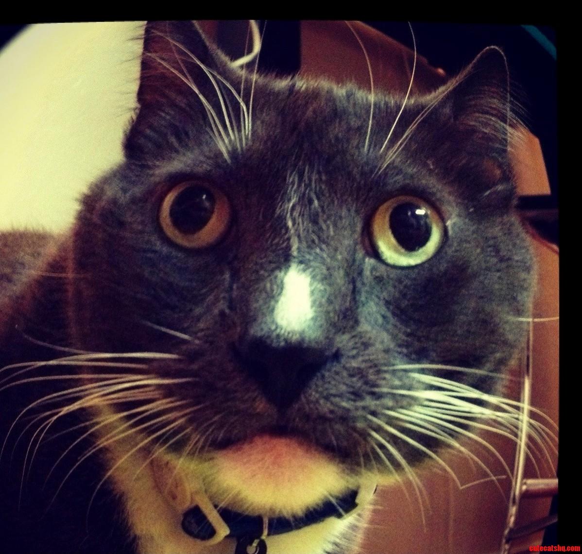 My Handsome Tuxedo Cat Looking Surprised