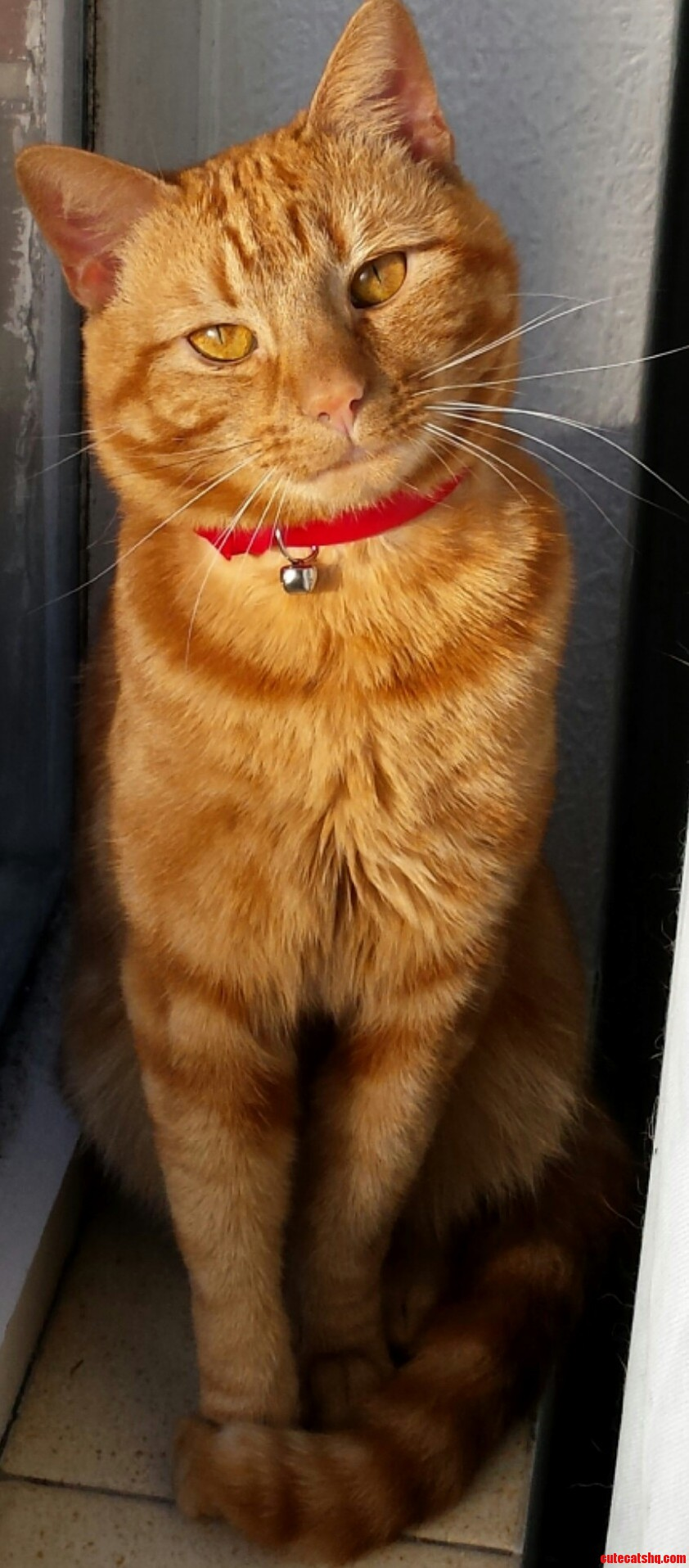 My Little Ginger Dude Hanging Out On The Windowsill.