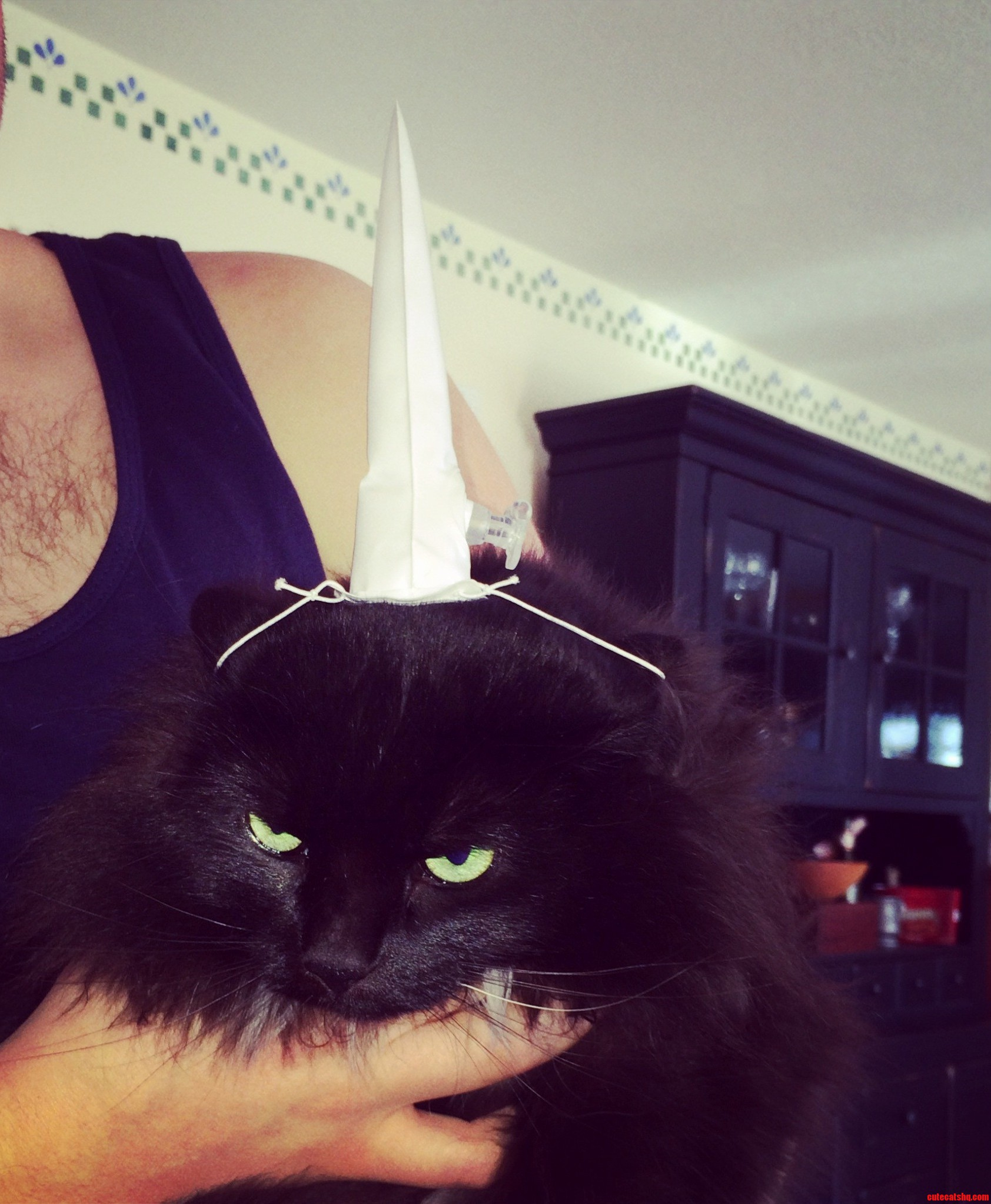 My Moms Cat Got A Unicorn Horn For Xmas. Needless To Say The Cat Was Not Impressed