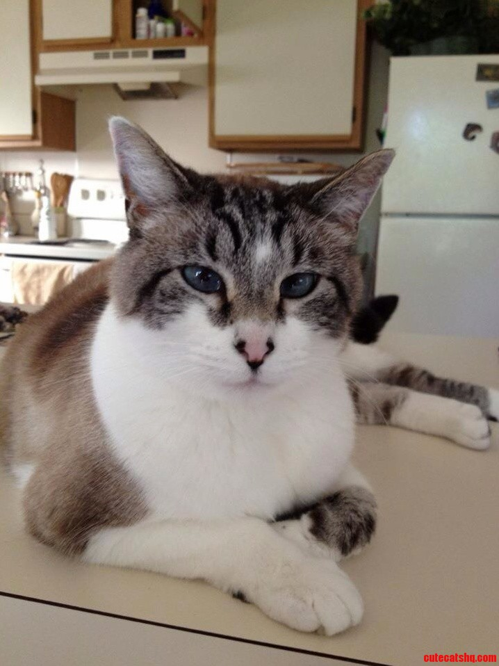 My Mothers Cross Eyed Fatty Cat. Meet Gracie.