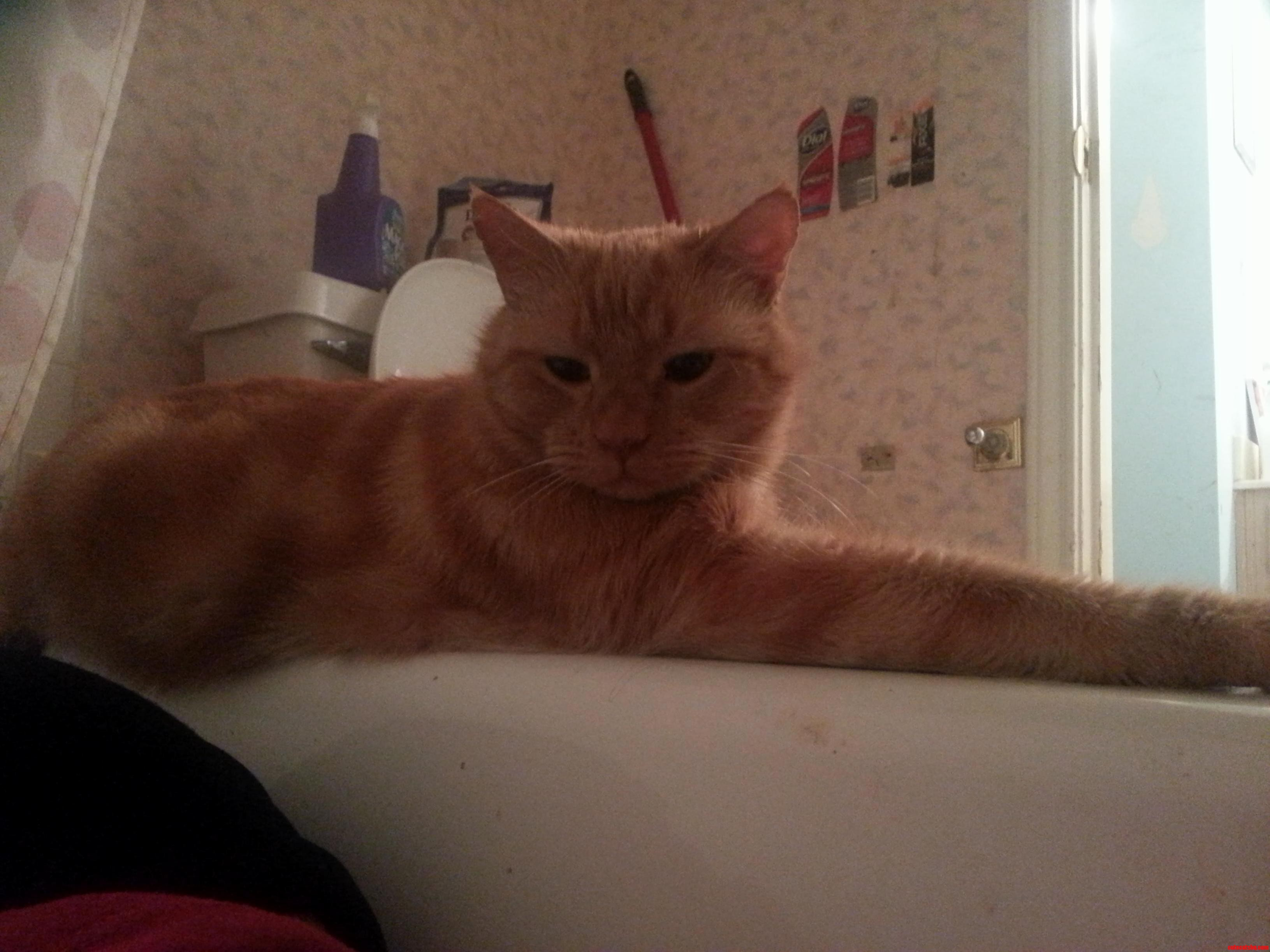 Nevermind He Just Fell In Love With Me. I Sat In The Bathtub To Seeif Hed Follow… He Did