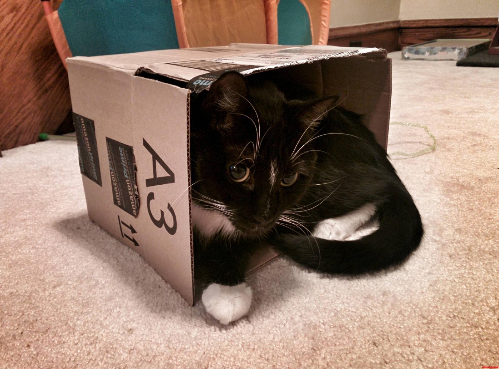 Nicos New Favorite Box