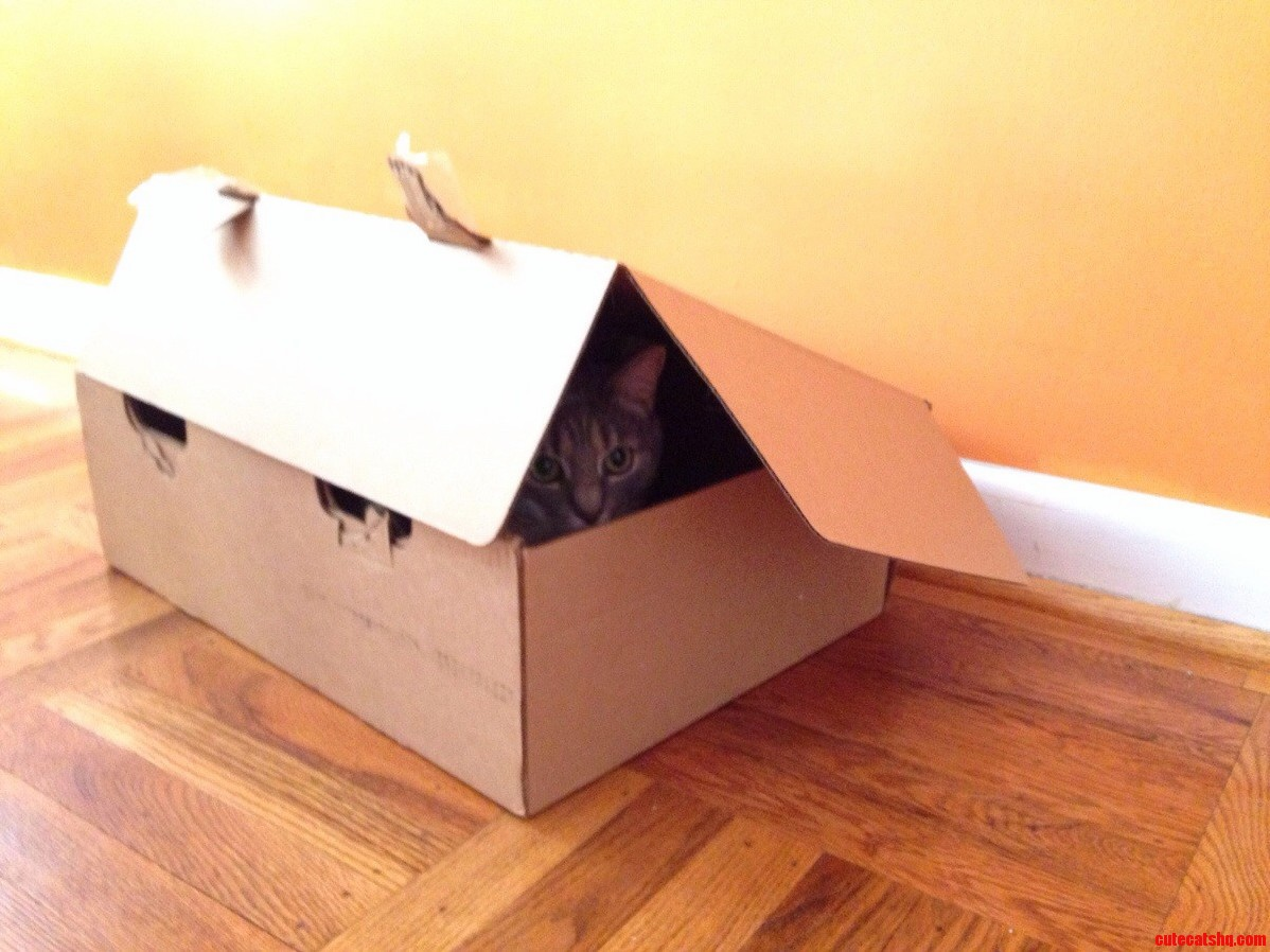 One Of My Cats Decided To Check Out This Empty Box
