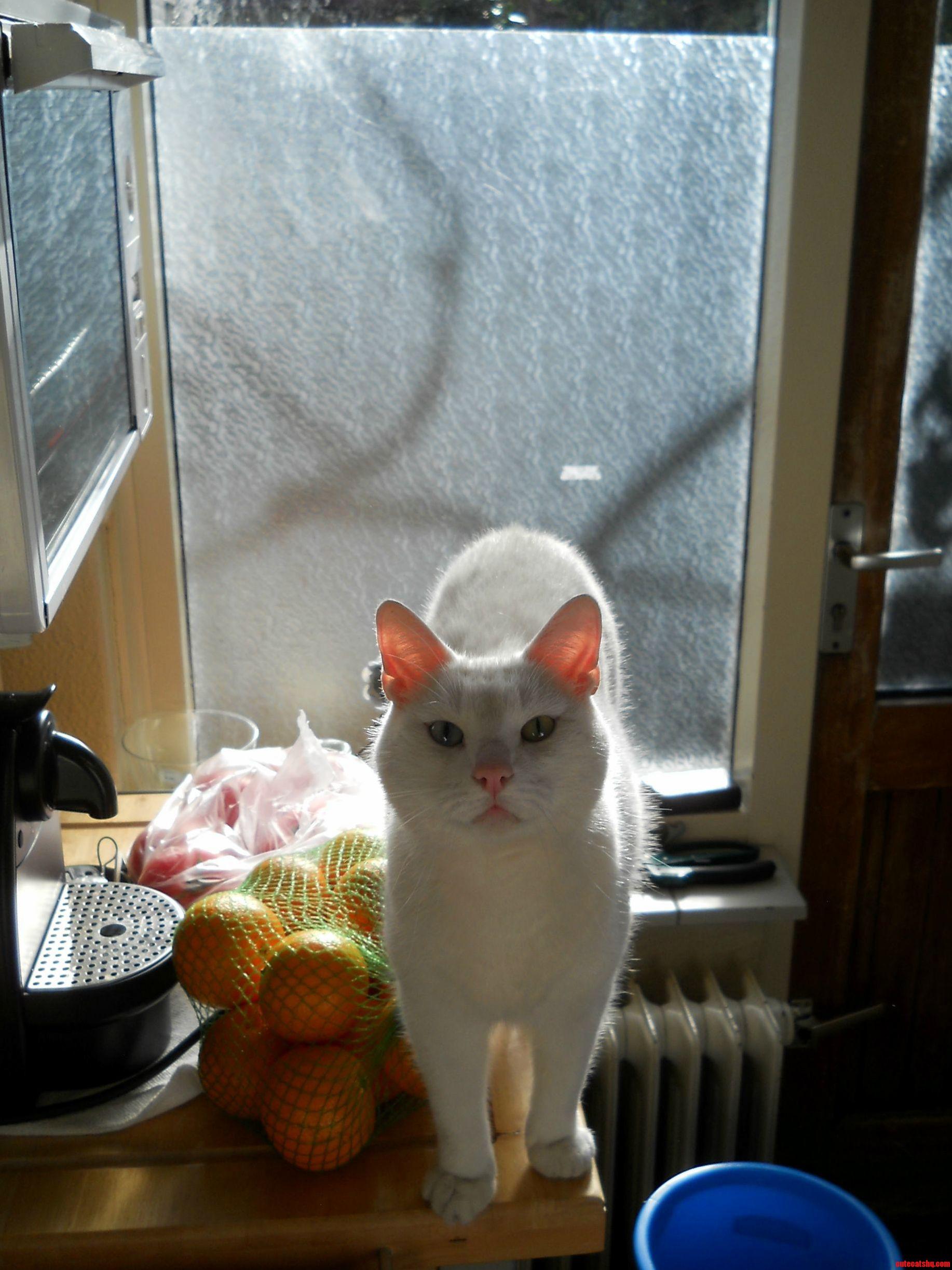 Our Cat Ninja.