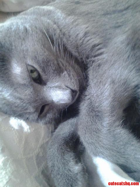 Our Russian Blue