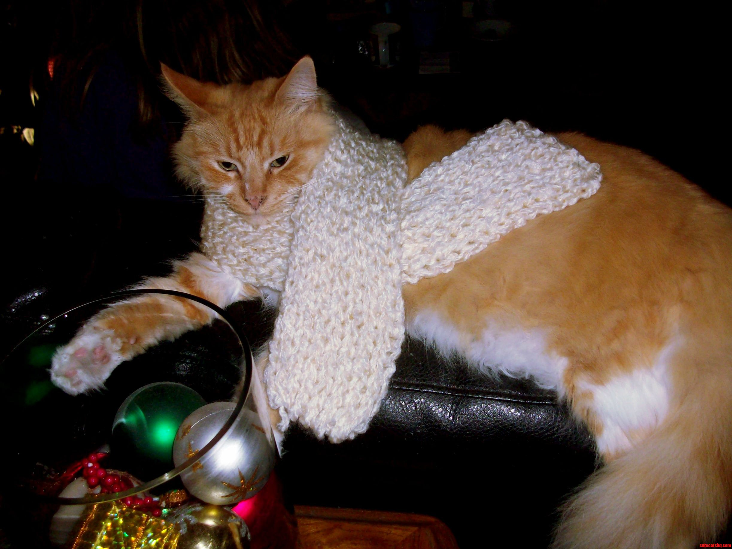 Ran Out Of Yarn Kitty Scarf