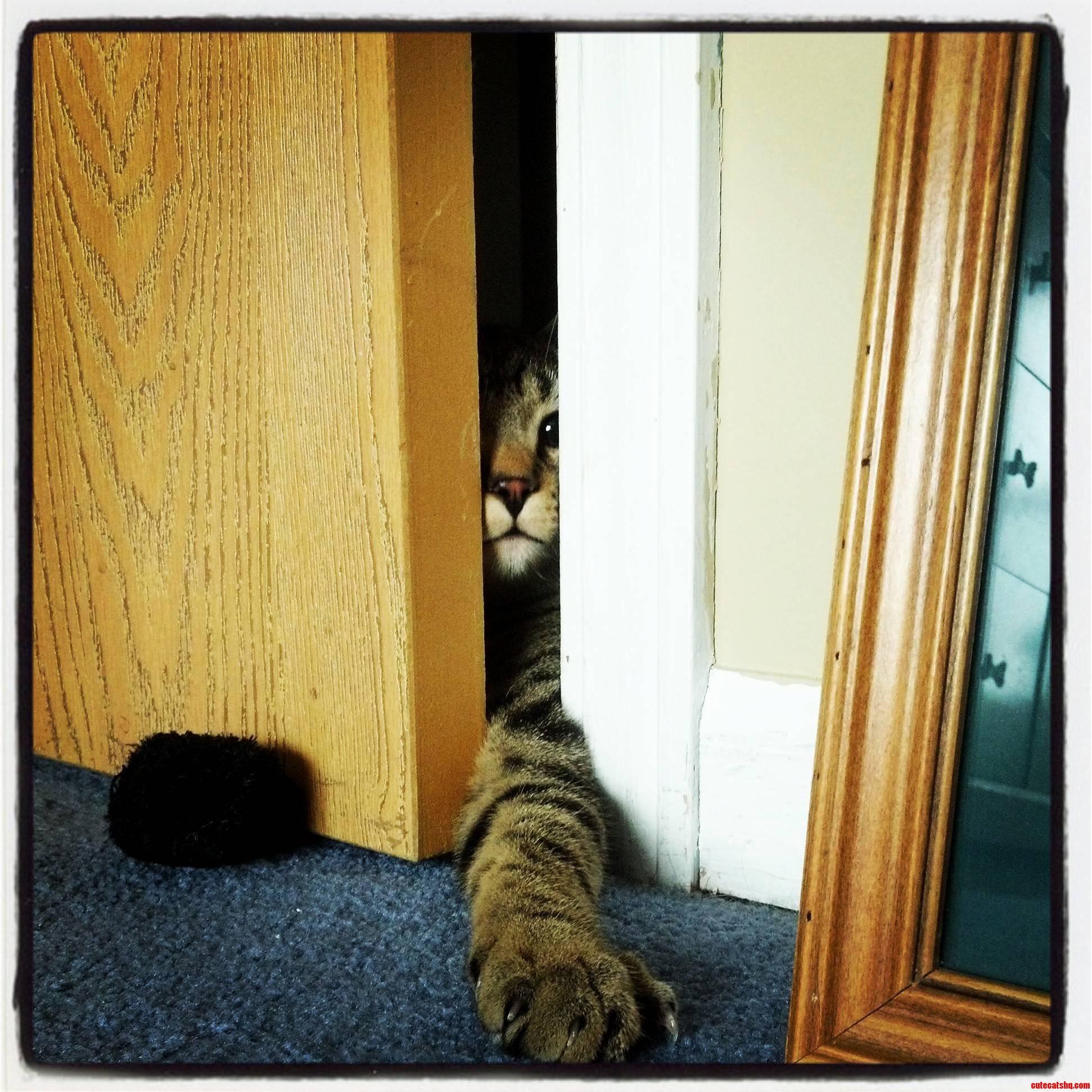 Roommates Kitten Trying To Sneak In