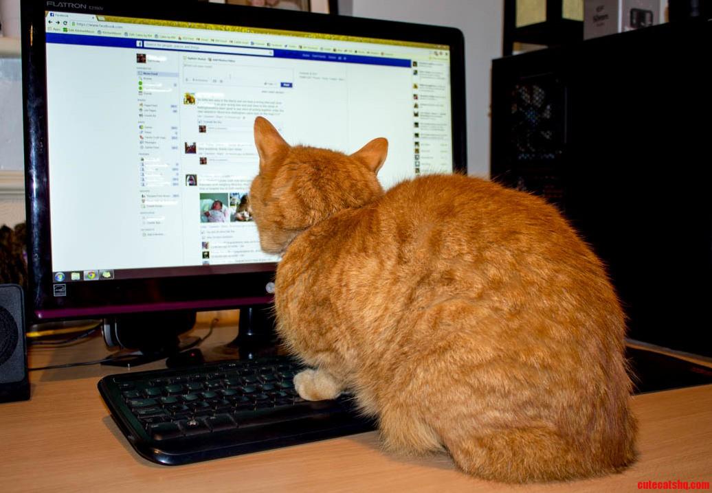 So My Cat Has A Social Life…