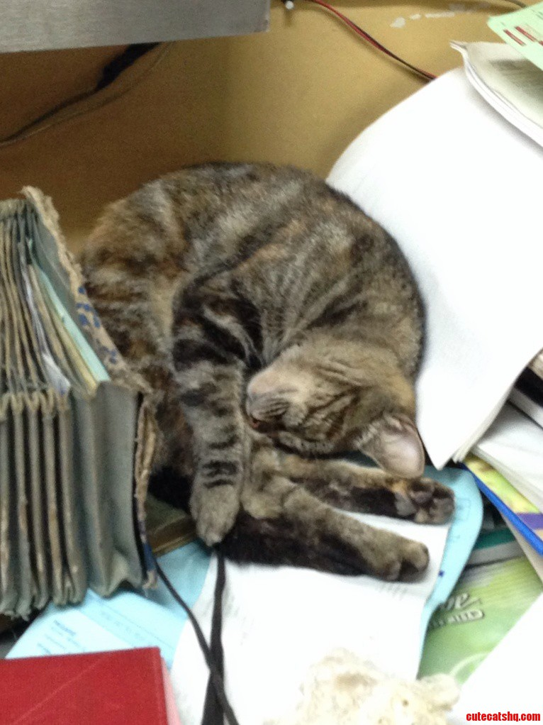 Sometimes My Cat Likes To Sleep Within My Junk Paper And Overdue Bills
