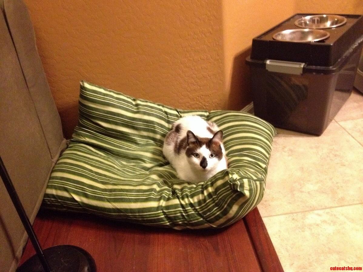 The Bed Thief Strikes Again