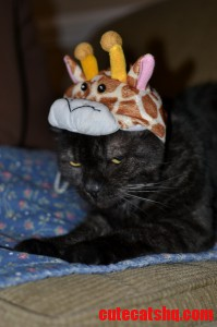 The Mad Giraffe Kitty
