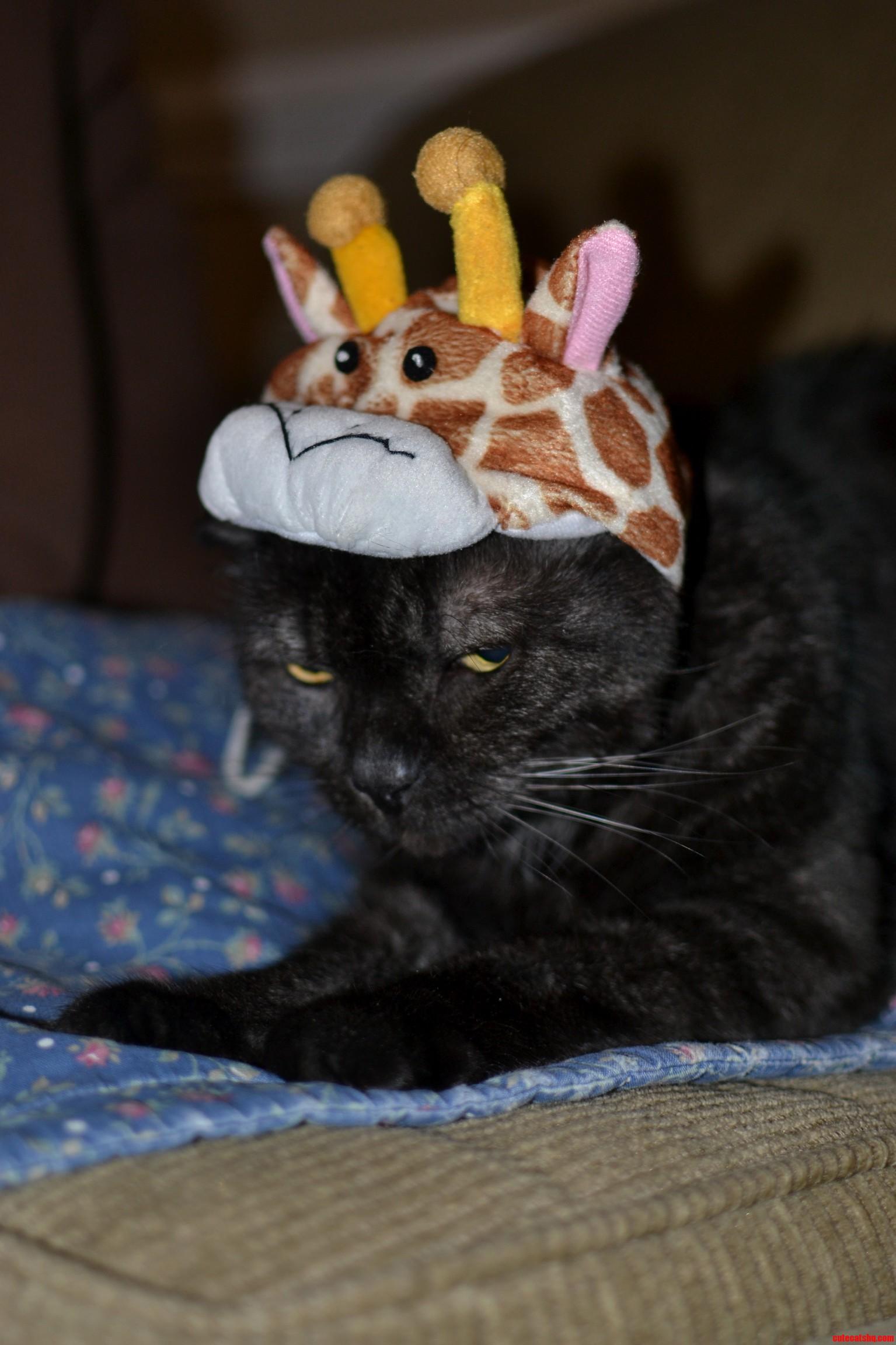 The Mad Giraffe Kitty