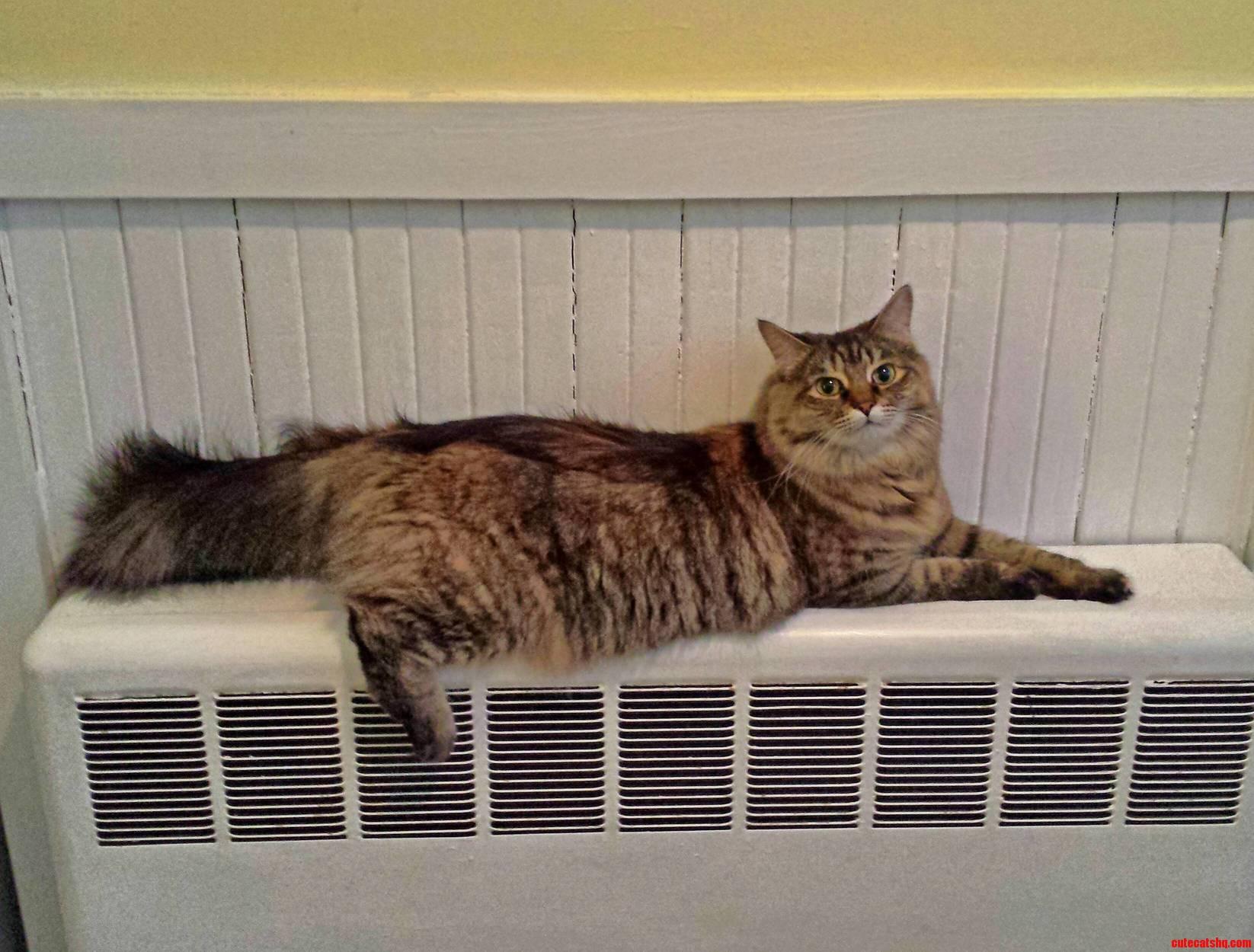 Warm Bum Happy Kitty.