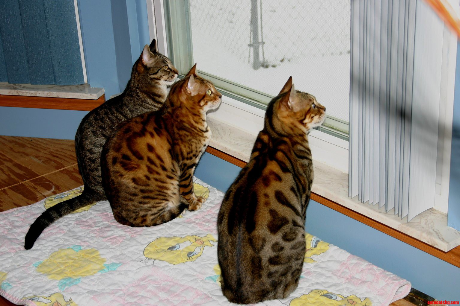 Watching The Birds And The Snow Fall On New Years Day
