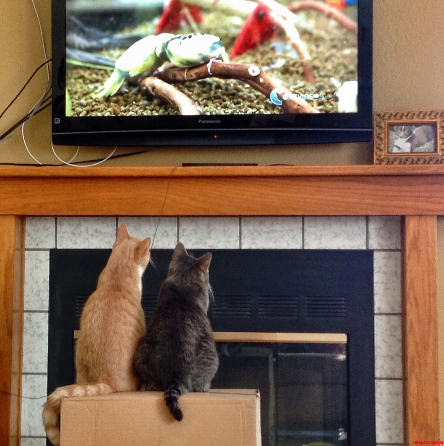 Watching Their Favorite Tv Show Breaking Bird.