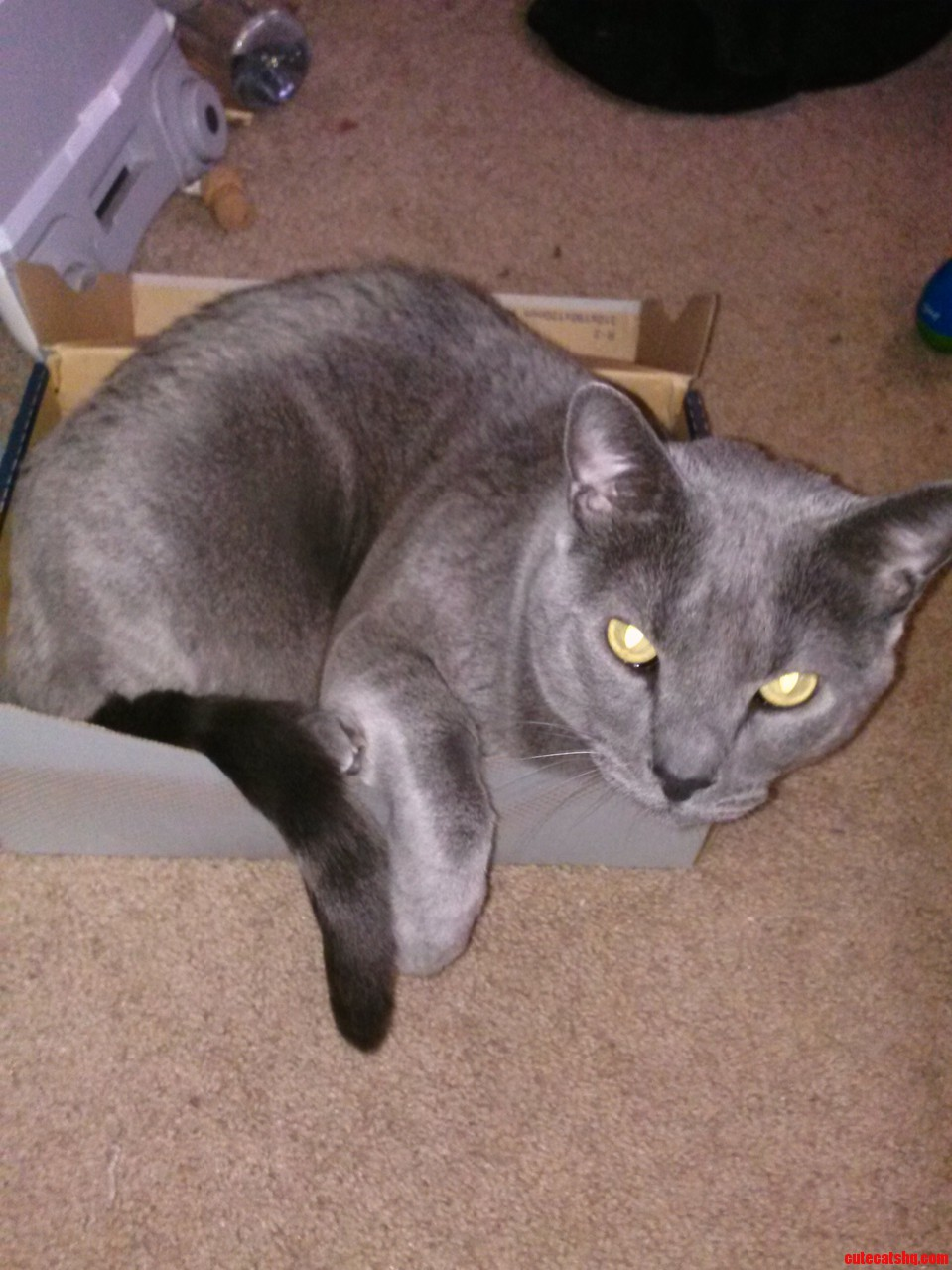 Yet Another Example Of If I Fits I Sits P