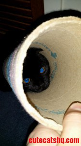 Cat Got Her Head Stuck In A Tube So Eye Took A Picture Like Little Sapphires
