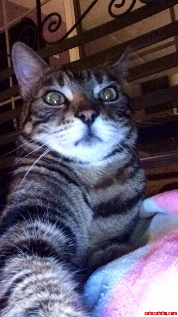 Cat Selfi