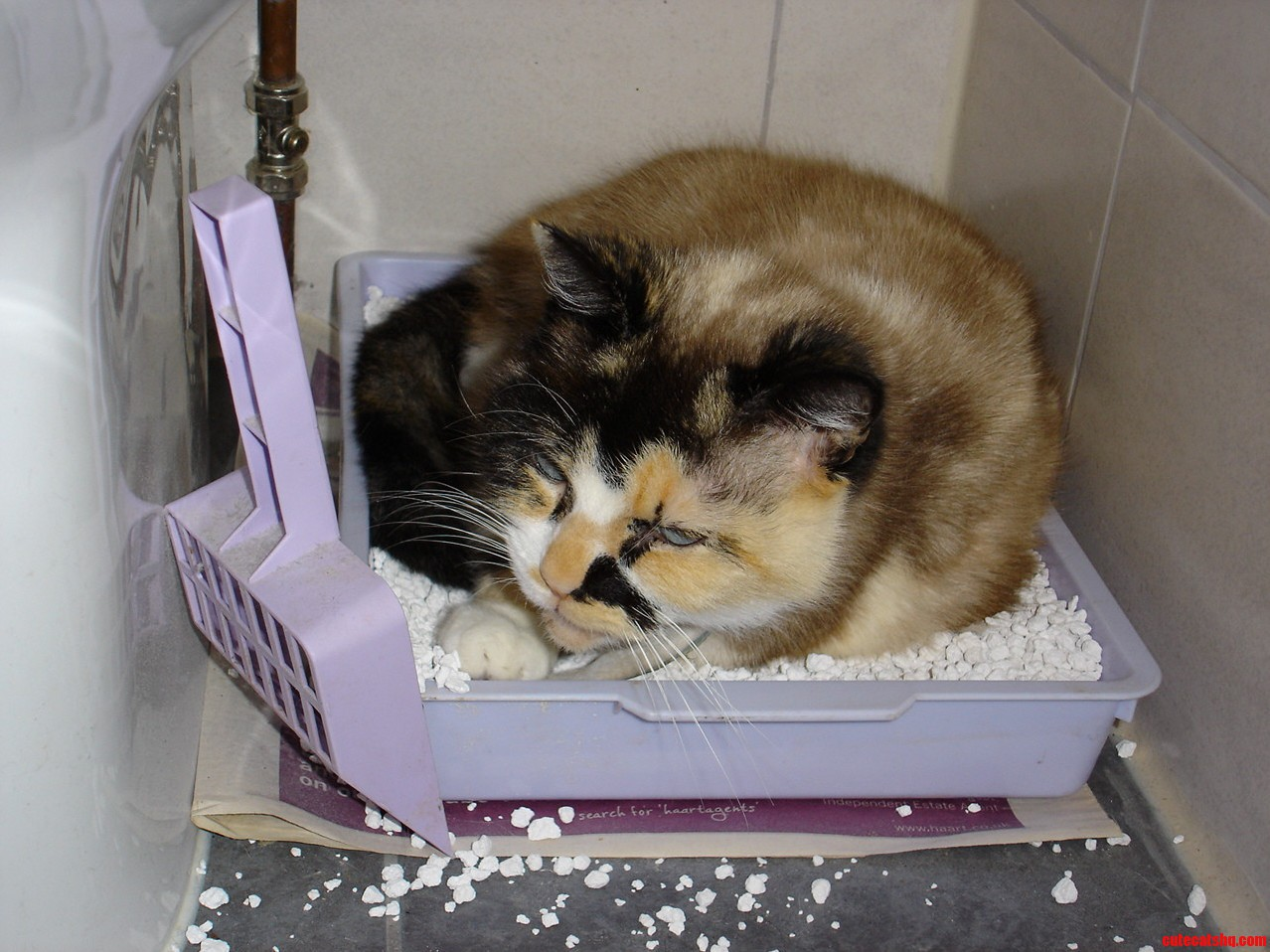 Cookie Has Recently Taken To Napping In Her Litter Tray. I Dont Even…