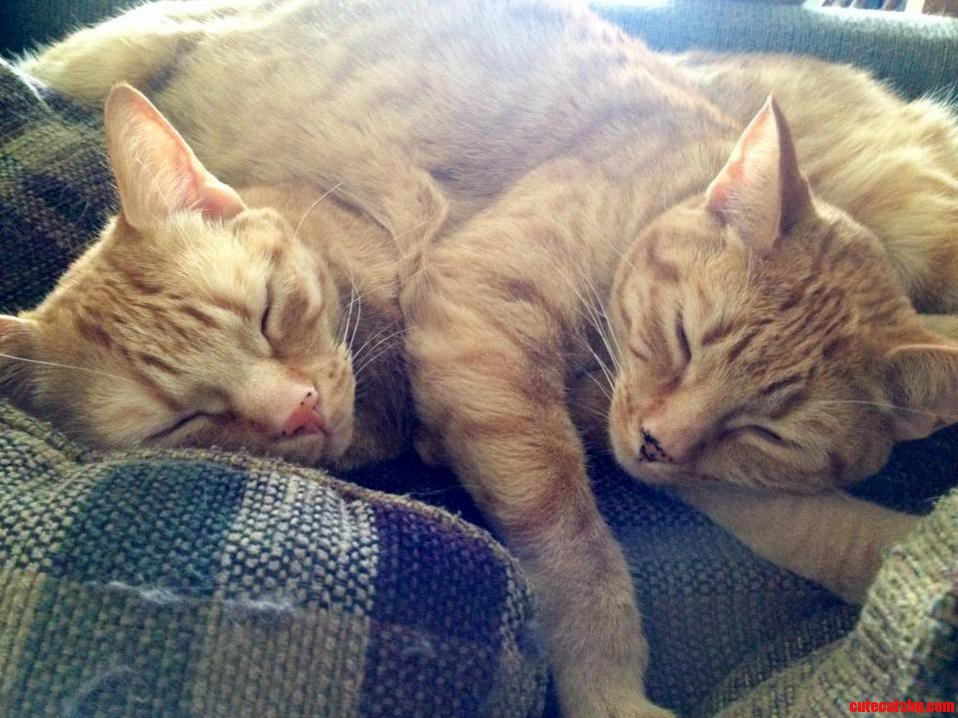 Ginger Sisters Sleeping Together