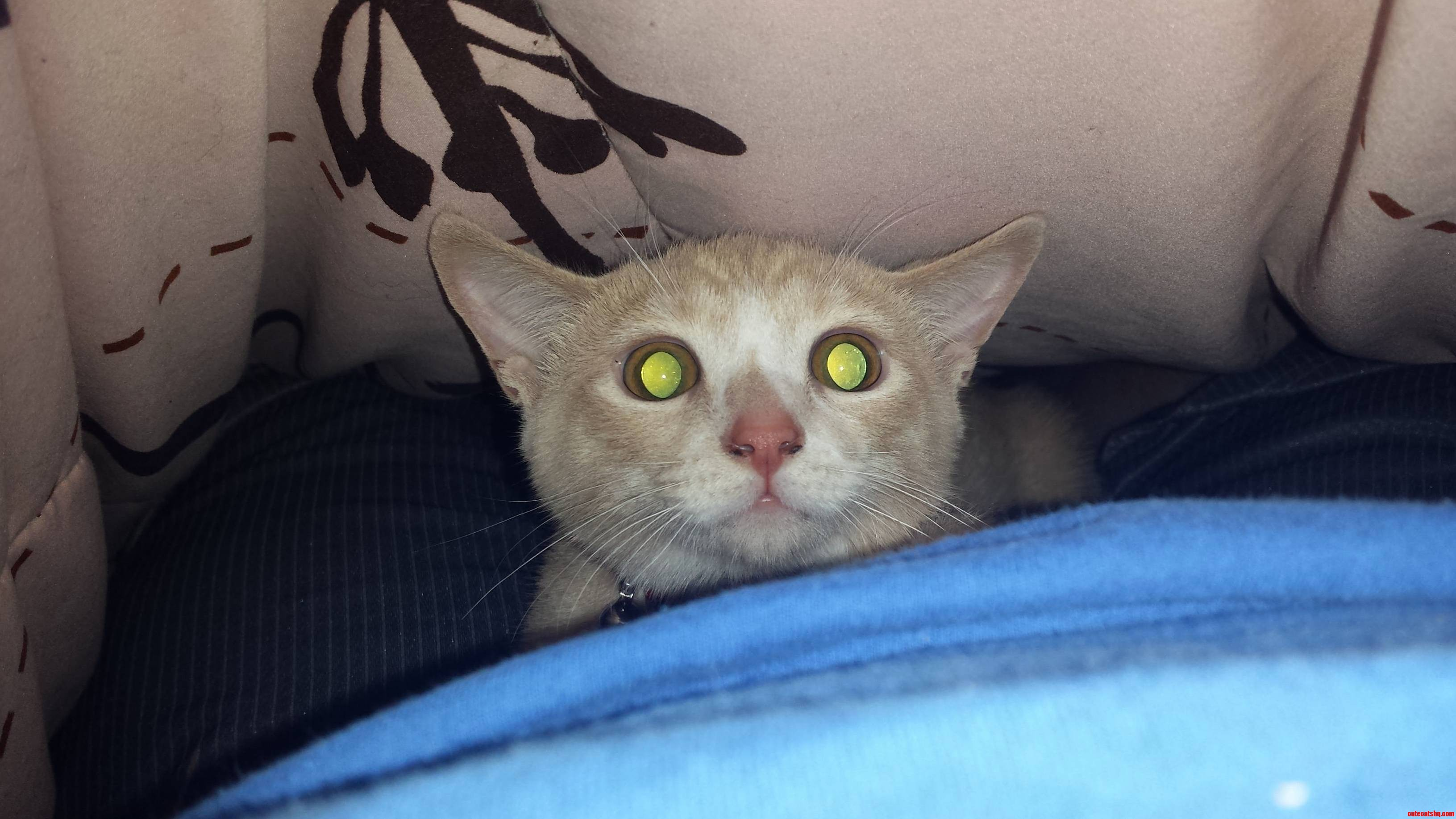 He Has The Crazy Eyes…