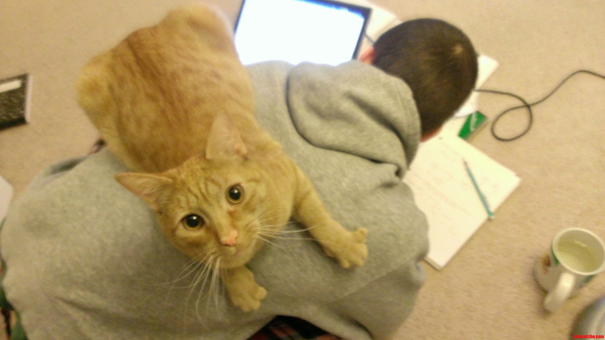 He Likes To Help With Homework.
