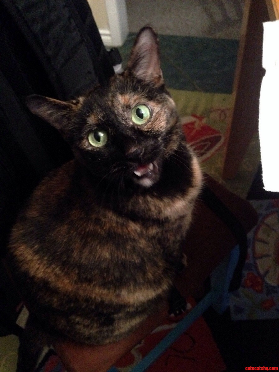 I Asked My Cat To Smile C
