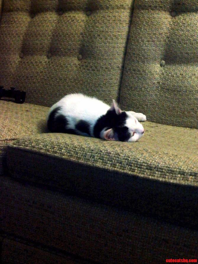 I Caught Ion Sleeping.
