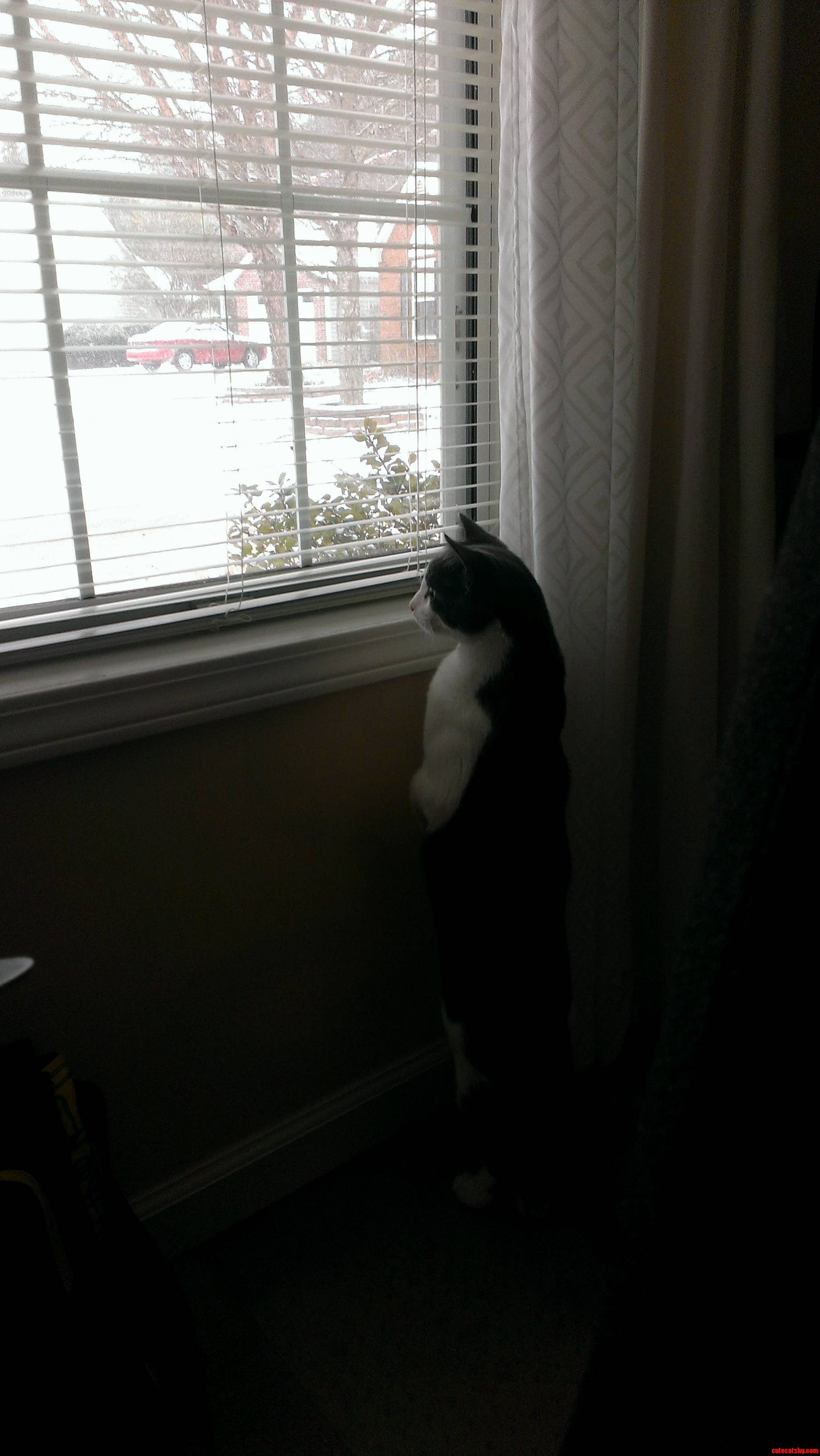 Jacks First Snow