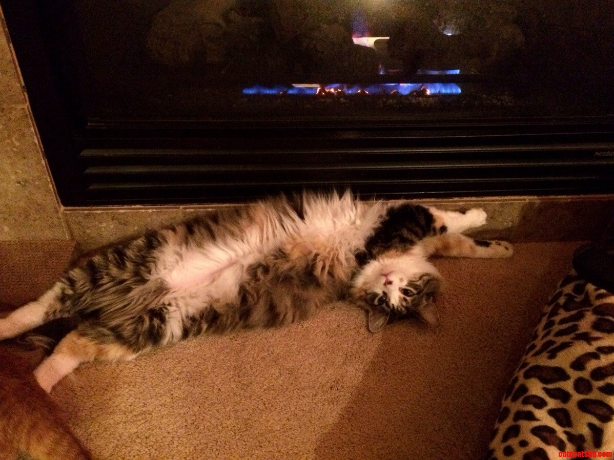 Jojo Loves The Fireplace On A Cold Winters Night…