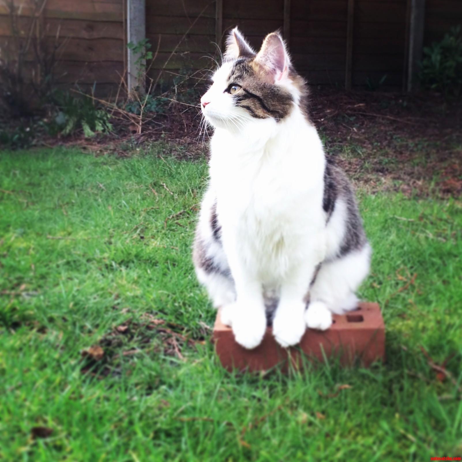 Just Sitting On A Brick…