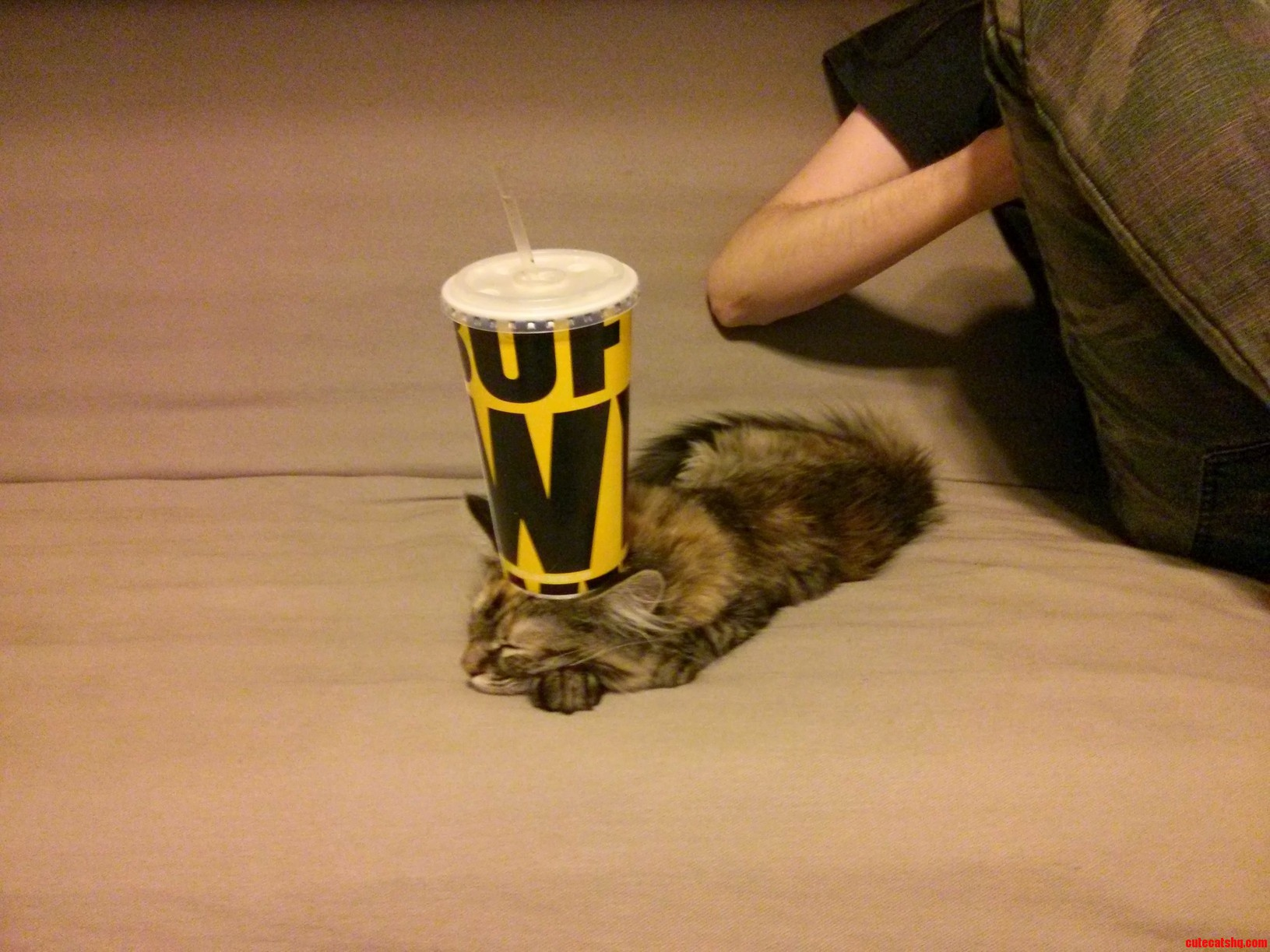 Lucyfurr Now Functioning As A Drink Holder.