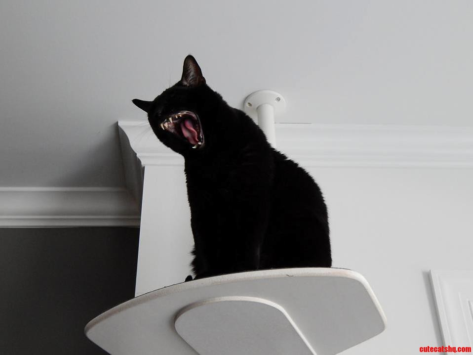 Magic The Ferocious Yawning Kitty Cute Cats Hq Pictures Of Cute