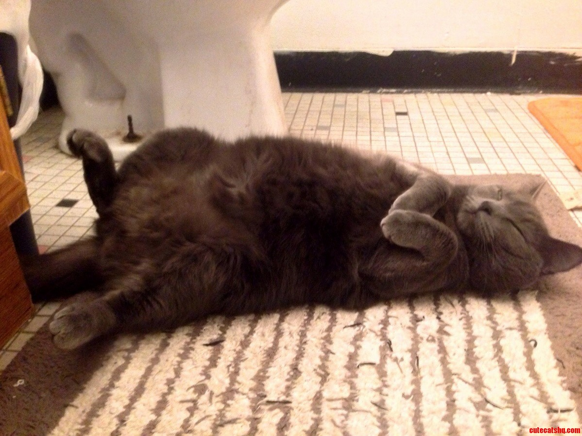 Meet Amun-Ra. Bathroom Naps Are Kind Of Her Thing.