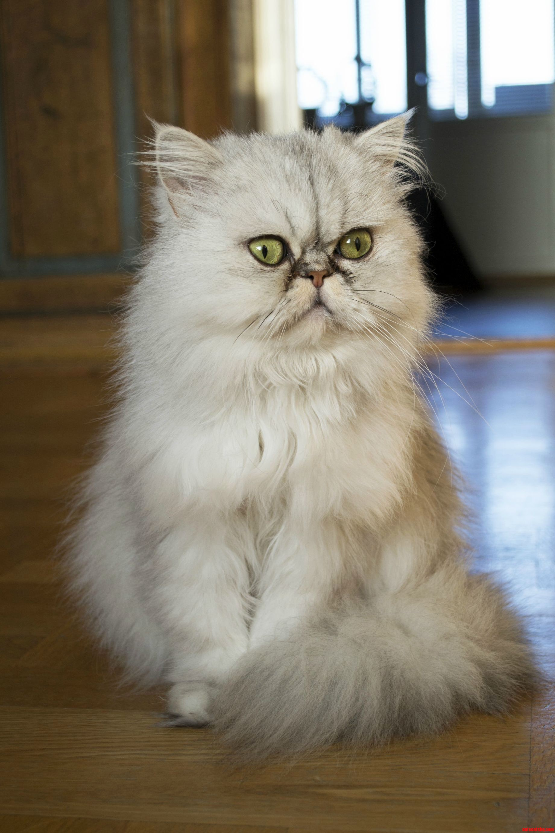 Meet My Persian Bellatrix Lestrange.
