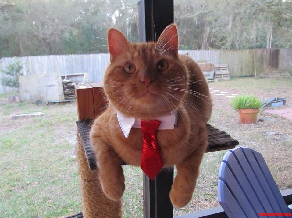 My Brothers Executive Cat