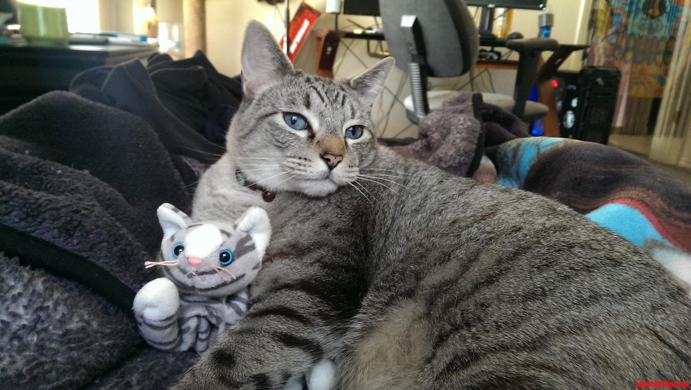 My Cat And His Cat.