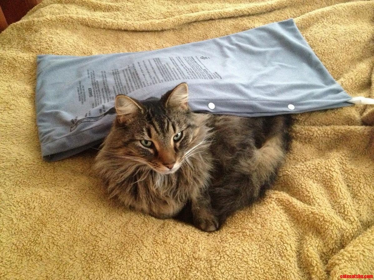 My Cat Found My Moms Heating Pad.