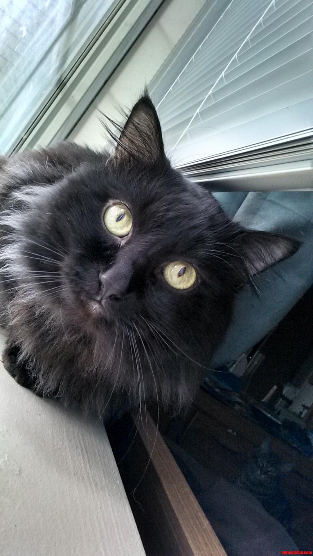 My Cat Gabriel
