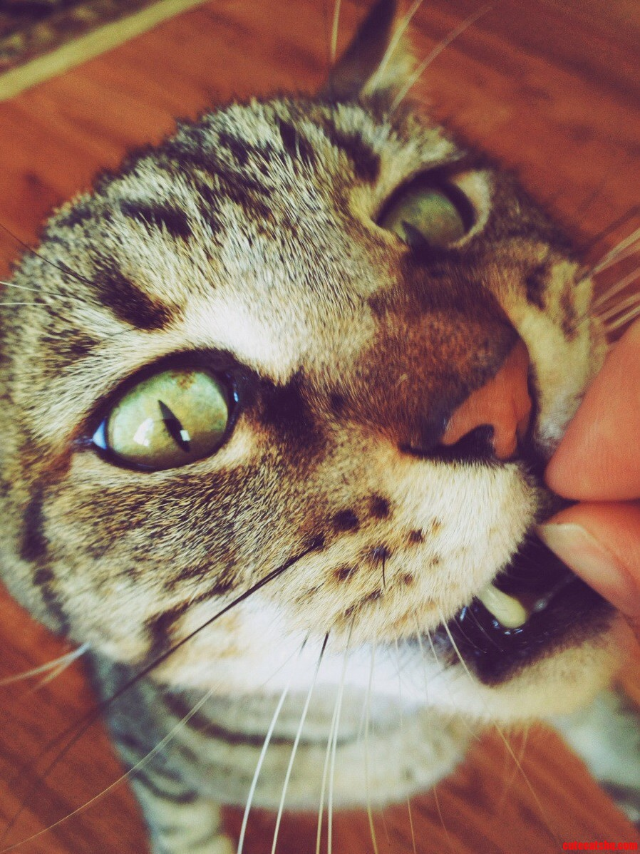 My Feline Boyfriend Edward Scissorhands.