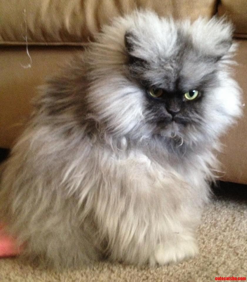 R.I.P. Colonel Meow.