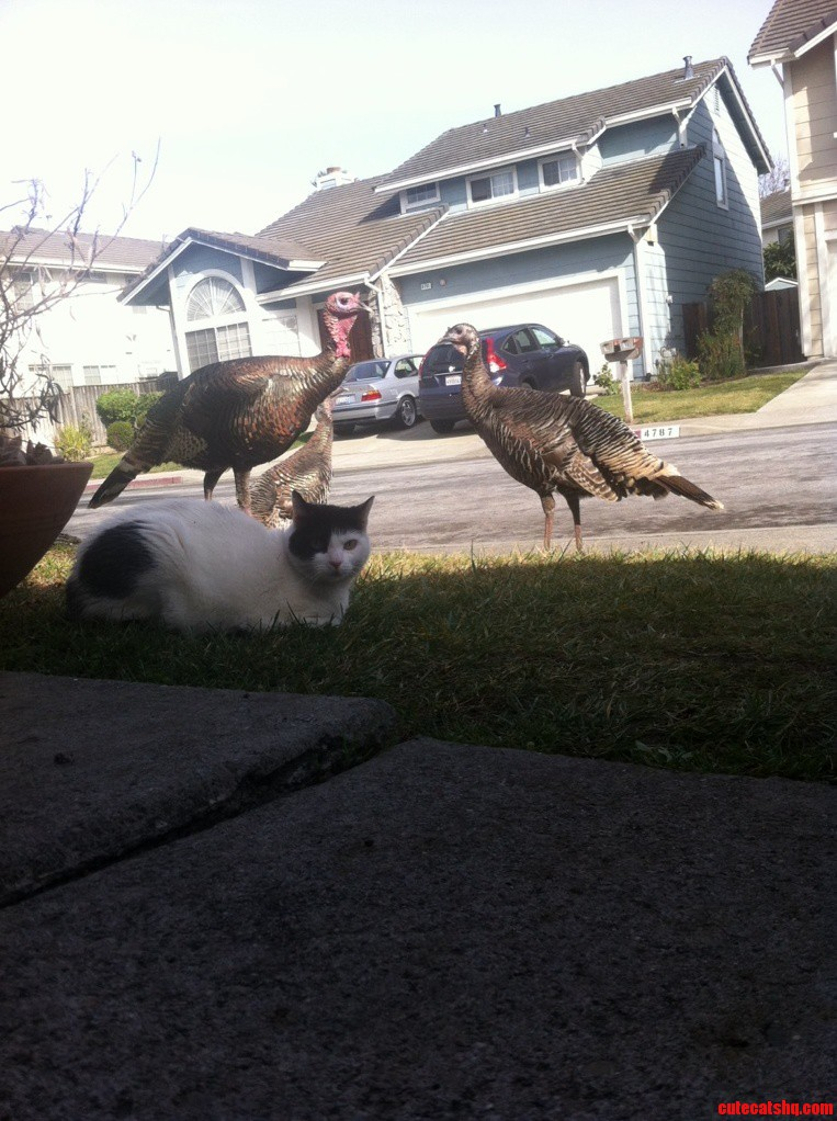 She Made Friends With Turkey S.