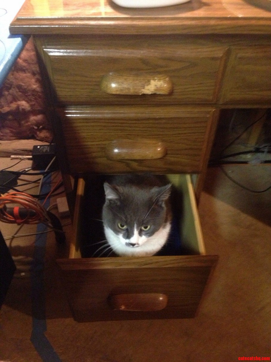 Silly Cat You Dont Belong In Drawers.
