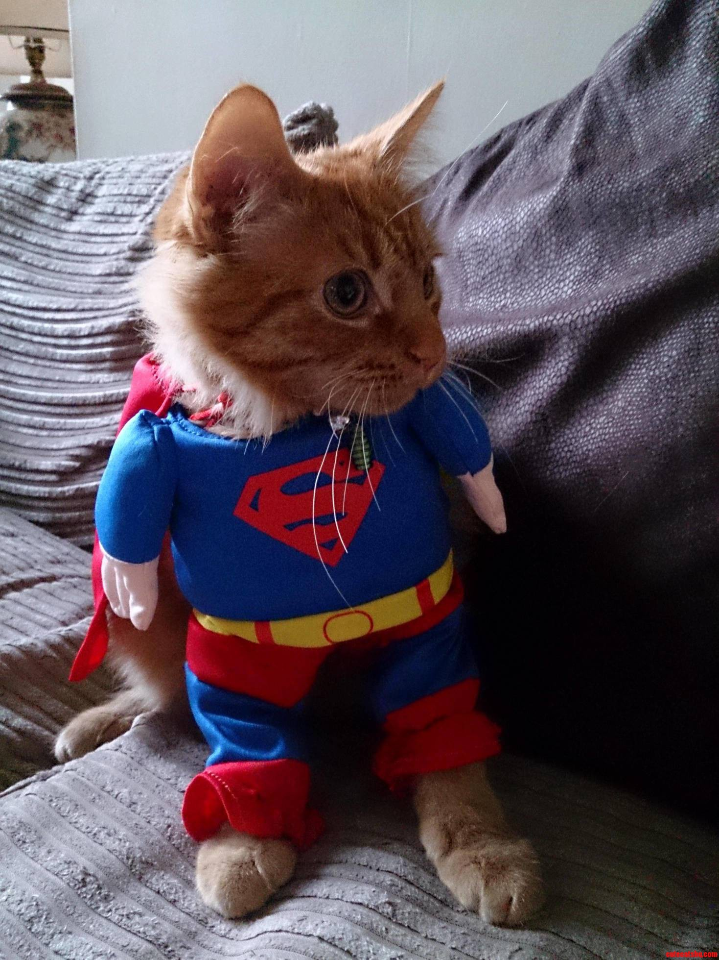 Super Cat Follow Wildeducation On Twitter For More Pics