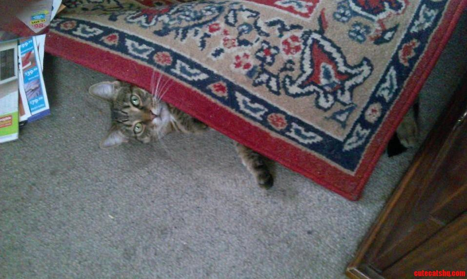 The Battle Against The Evil Rug Continues